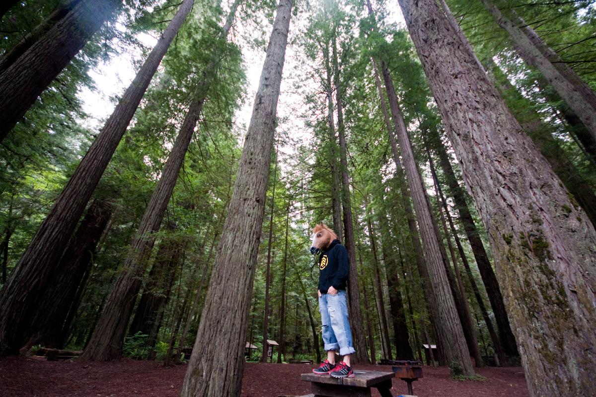 Redwood Horse
